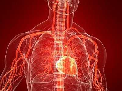 人体内有多少血液 人体留多少血会死