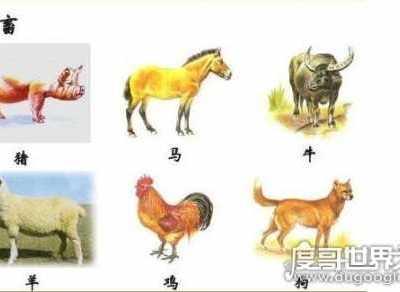 六畜是什么 六畜指的是什么