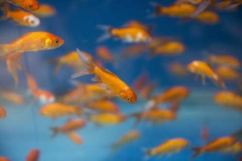 生存了3.6亿年却不是鱼 七鳃鳗