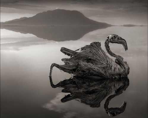 """坦桑尼亚""""冥湖""""纳特龙湖里有鱼吗 鱼最多的动物"""